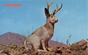 Strange Animals in the House of Knowledge: On Forteans & Paranoia Jackalope-300x188