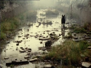 The Vicinity of the Real (Tarkovsky's Stalker) Stalkerdog2-300x226