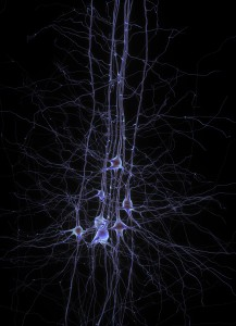 The Phil Dick Circuit and the Future of Precognitive Technology Neurons-217x300