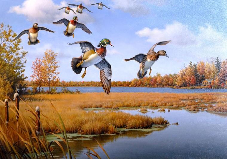 Master Minkowski's Wild Ducks (Zen and the Glass Block Universe) Ducks1