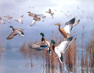 Master Minkowski's Wild Ducks (Zen and the Glass Block Universe) Ducks5-300x235